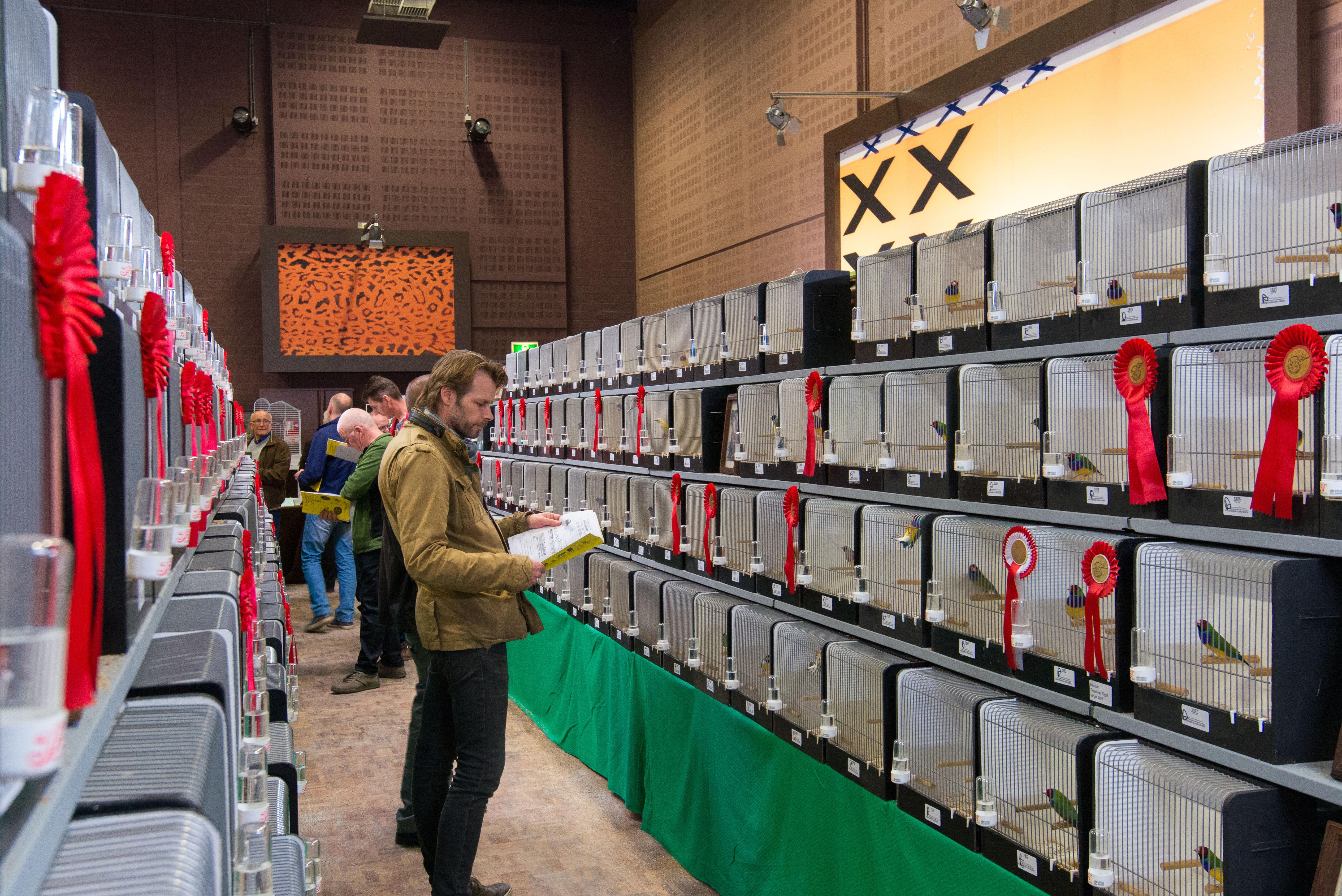 Grote internationale vogelshow @ Gemeenschapshuis d'n Binger | Meijel | Limburg | Nederland